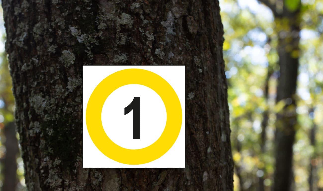 weißes Quadrat mit gelbem Kreis darin eine 1 auf Baumstamm