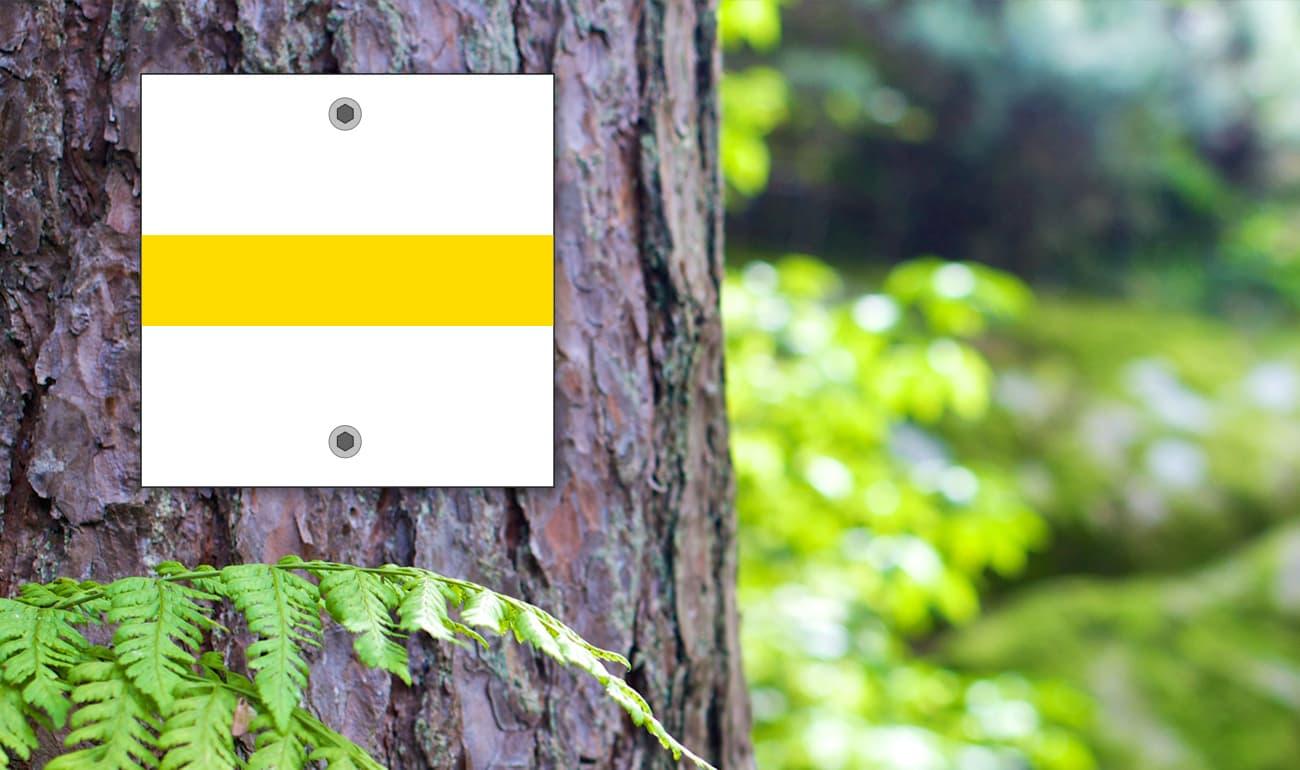 weißes Quadrat mit gelben Strich auf Baumstamm